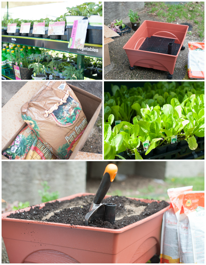 How To Digin And Grow A Salad Garden At Home