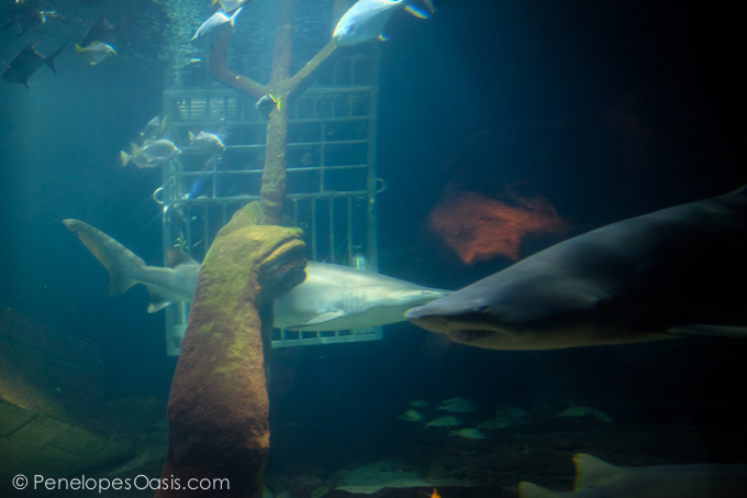 Adventures Under The Sea Penelopes Oasis