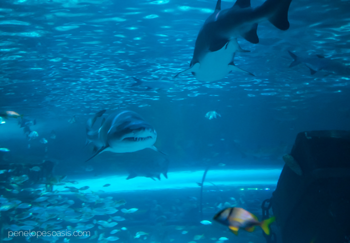 ripleys aquarium-2