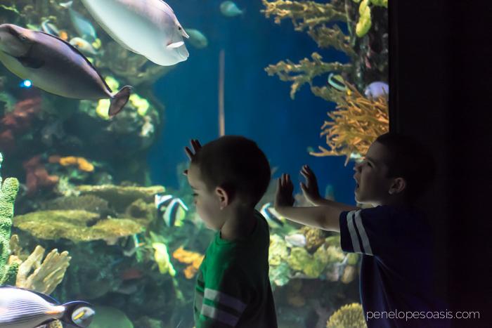 ripleys aquarium-4