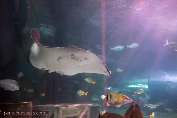ripleys aquarium-5