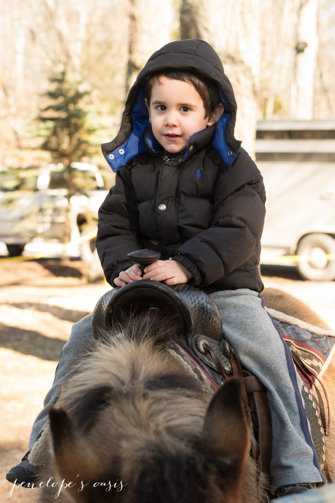 pony rides-3