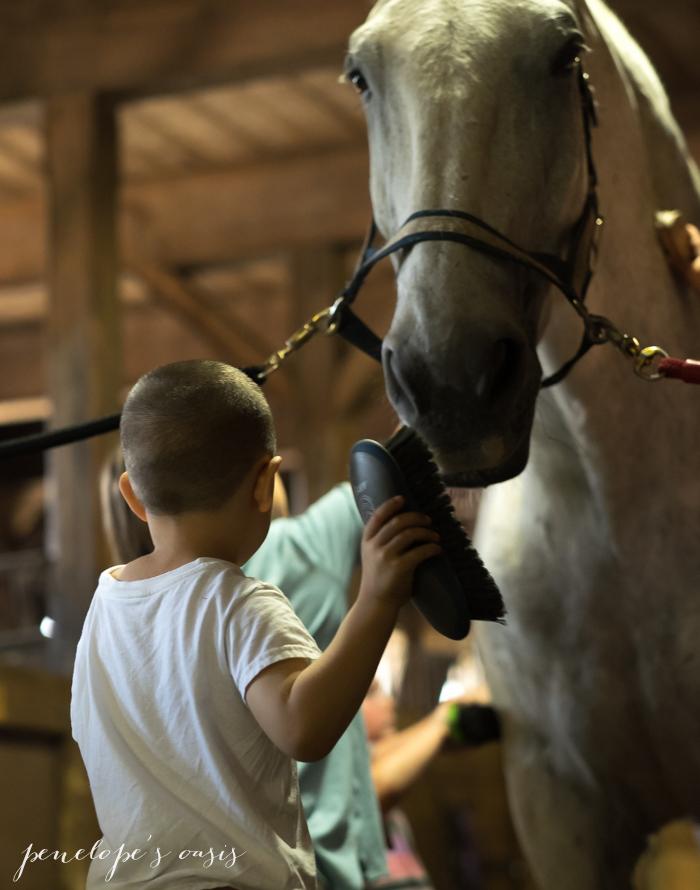 New Hampshire Horseback Riding-5