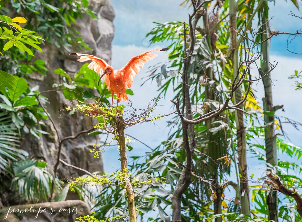 Bronx Zoo World of Birds