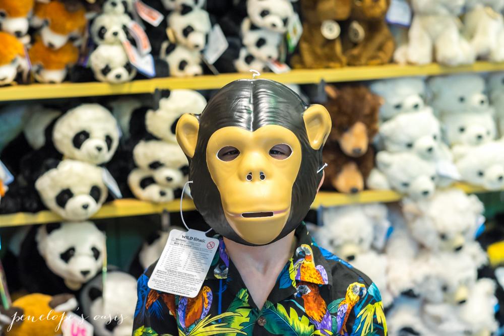 Bronx Zoo gift shop