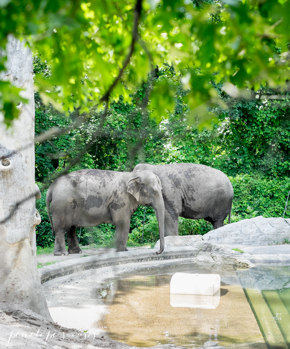 A Day At The Bronx Zoo » Penelopes Oasis Bronx Zoo Animals