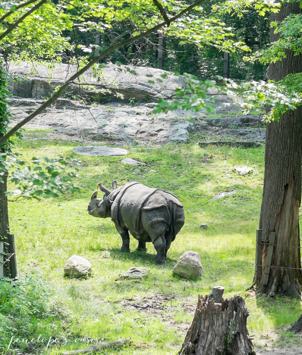 A Day At The Bronx Zoo » Penelopes Oasis