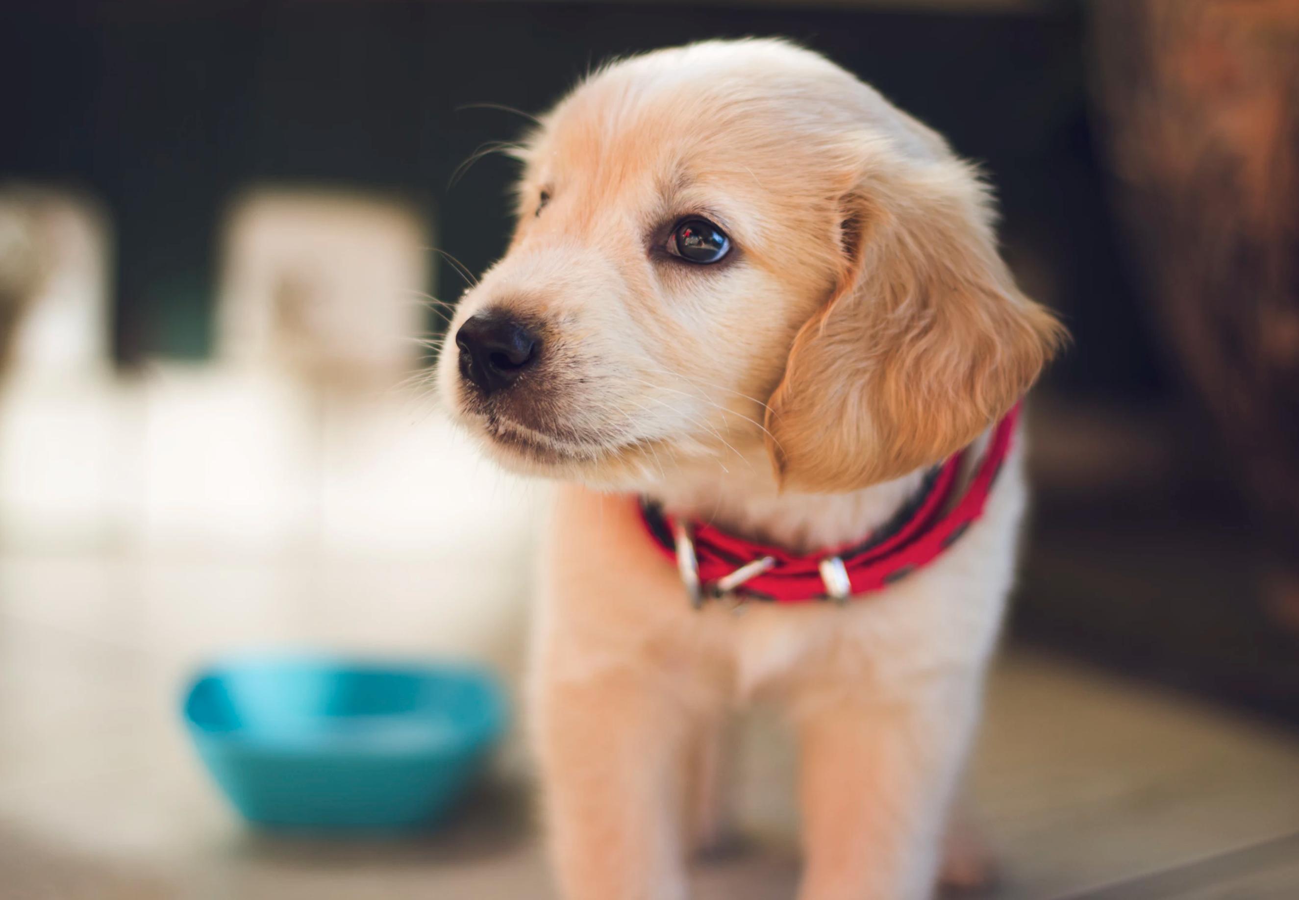 adopt a pet information