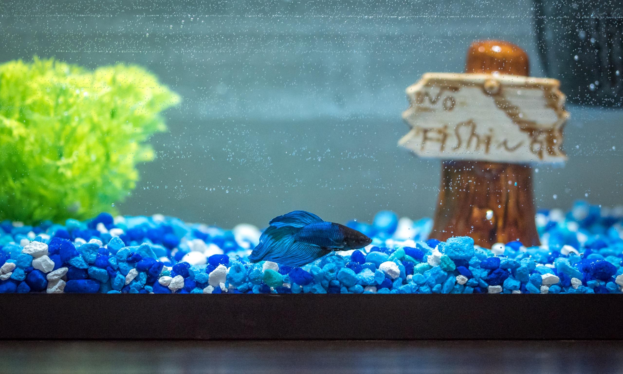Taking Care Of Pet Fish 101 Penelopes Oasis